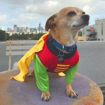 Robin Ready for action, this fearless superhero wants your city's support. Vote for Robin