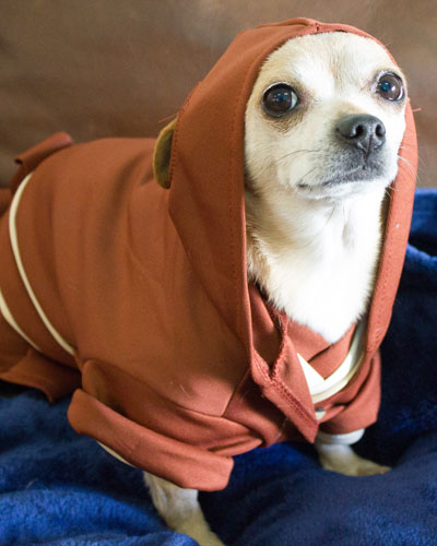 Jedi Knight Protector of the office, the force is strong with this one.