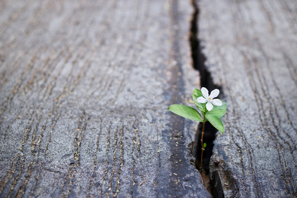 Flower growing in a crack in a rock