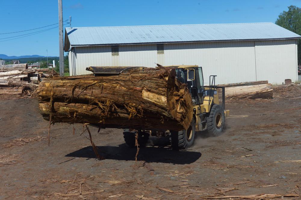 Loader with big log.jpg