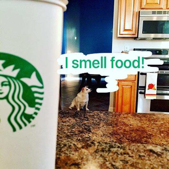 This little guy! 🐕🐾 #dogsofinstagram #breakfasttime #hello #starbucks