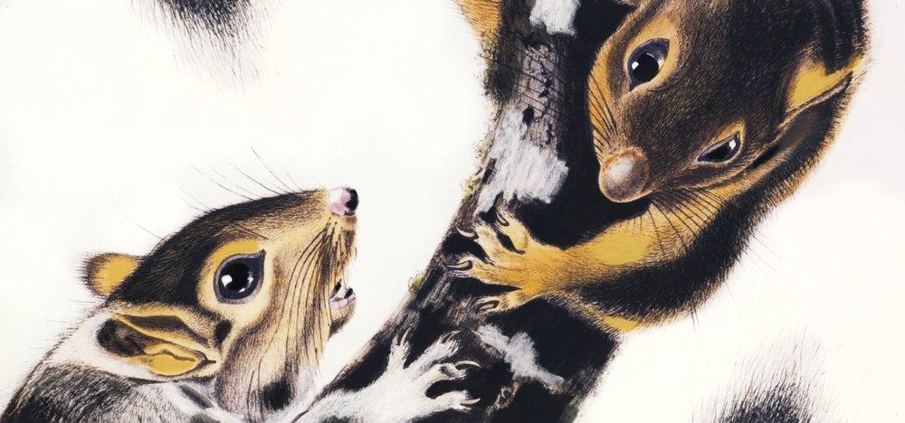 Wilde Beest Kingston Squirrels Carla Rozman Large Paintings for Restaurants.jpg