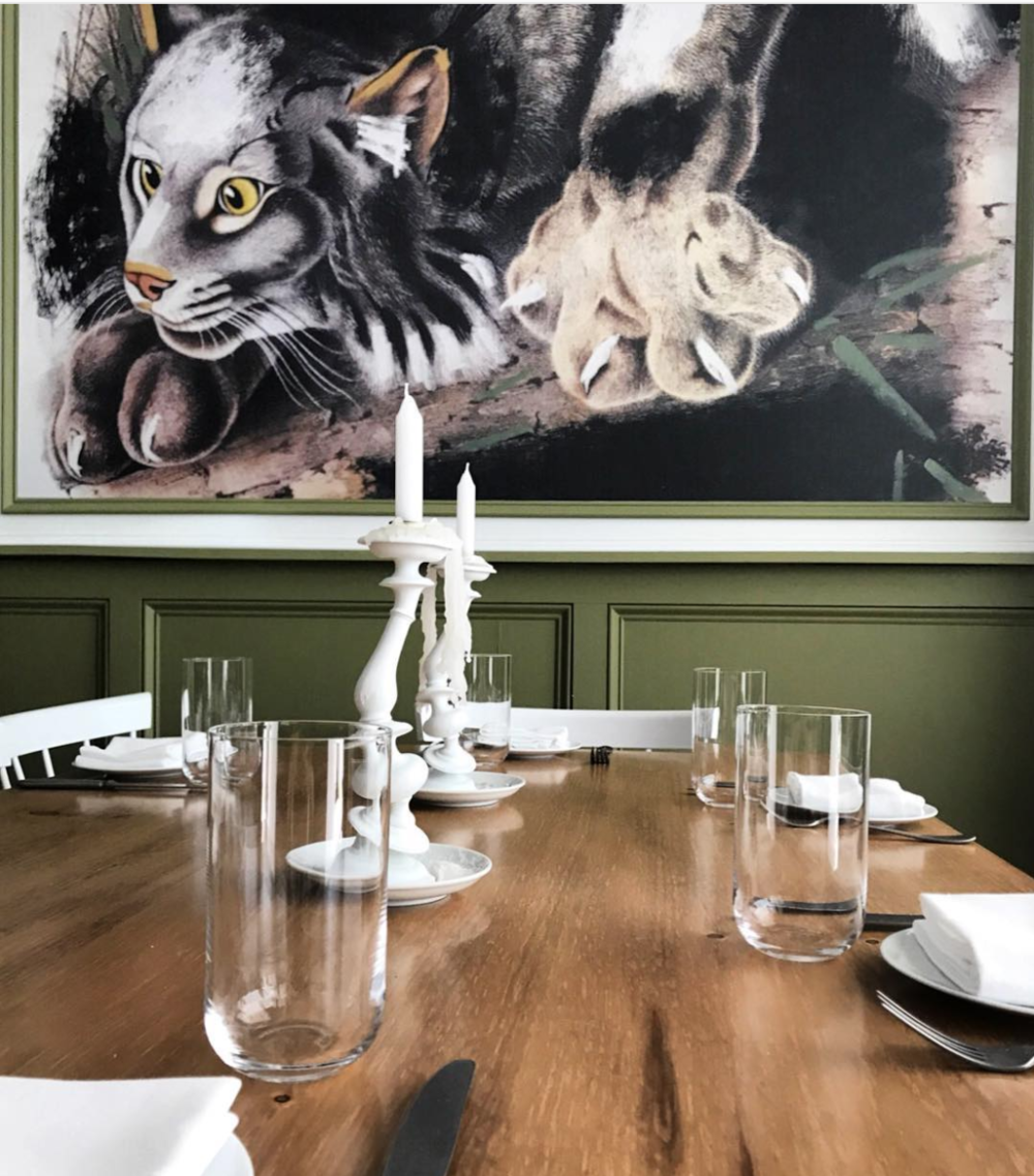 Bobcat watches while you eat