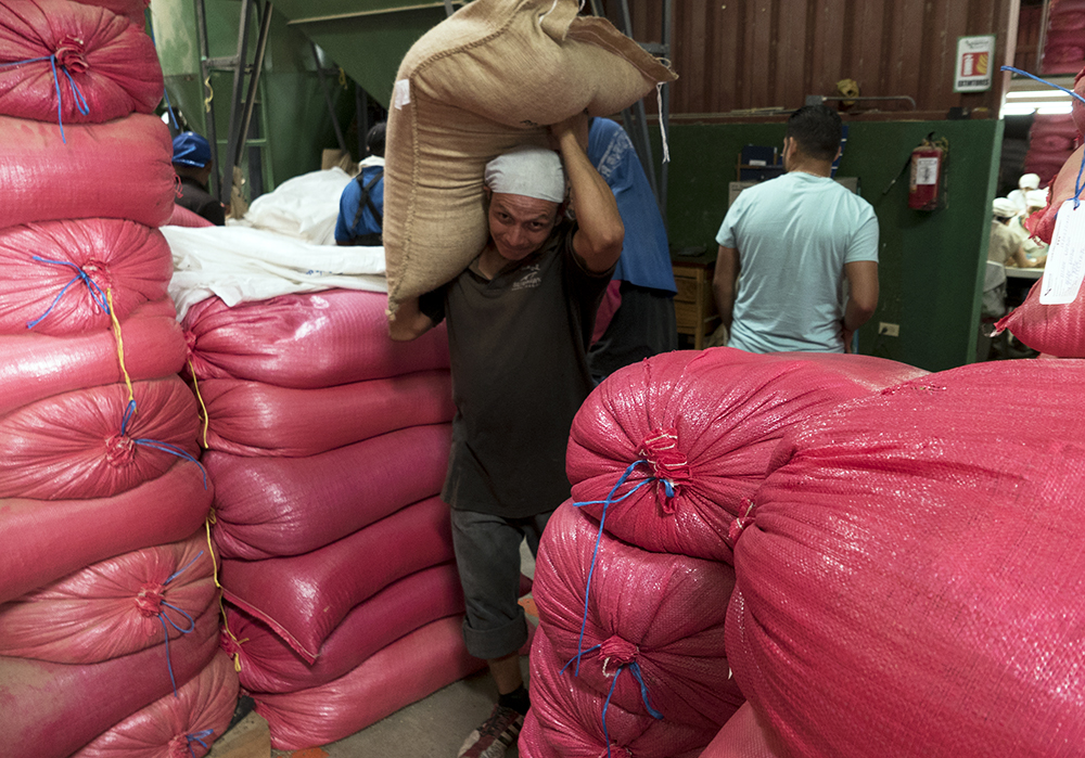 A worker carries a bag of coffee ready for shipment at a co-operative in Jinotega.