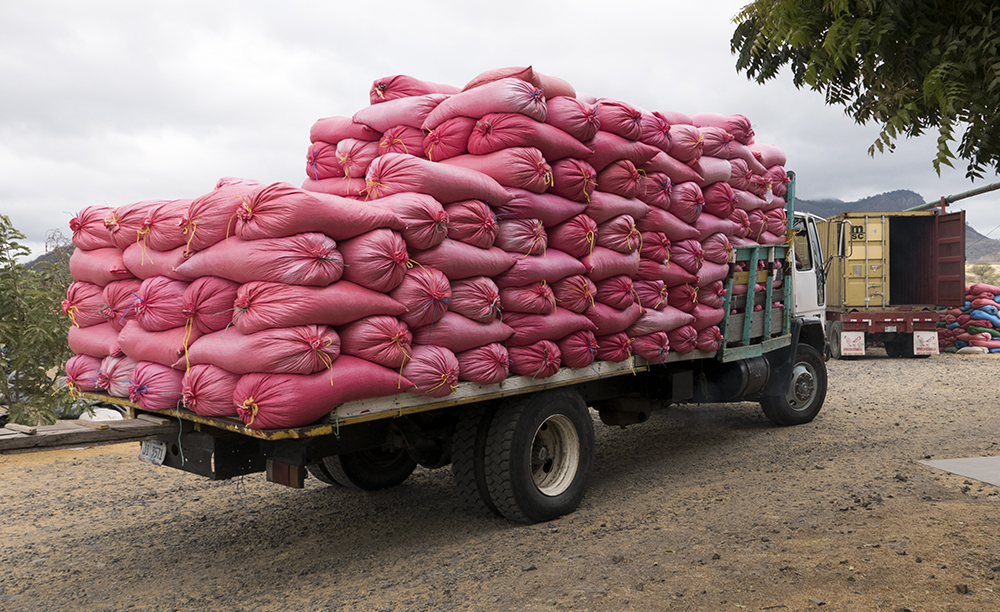Bags are loaded up and ready for shipment at a co-operative in Jinotega.