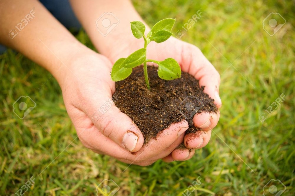2530979-hand-holding-a-green-plant-on-soil-Stock-Photo-hands.jpg