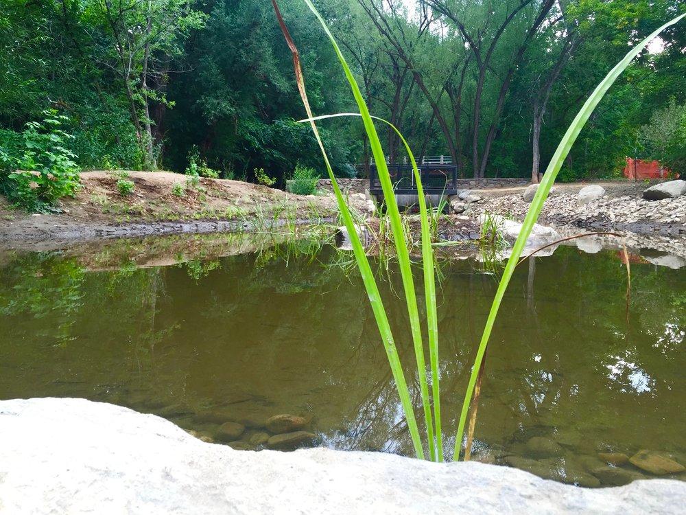 Riparian Ponds.jpg