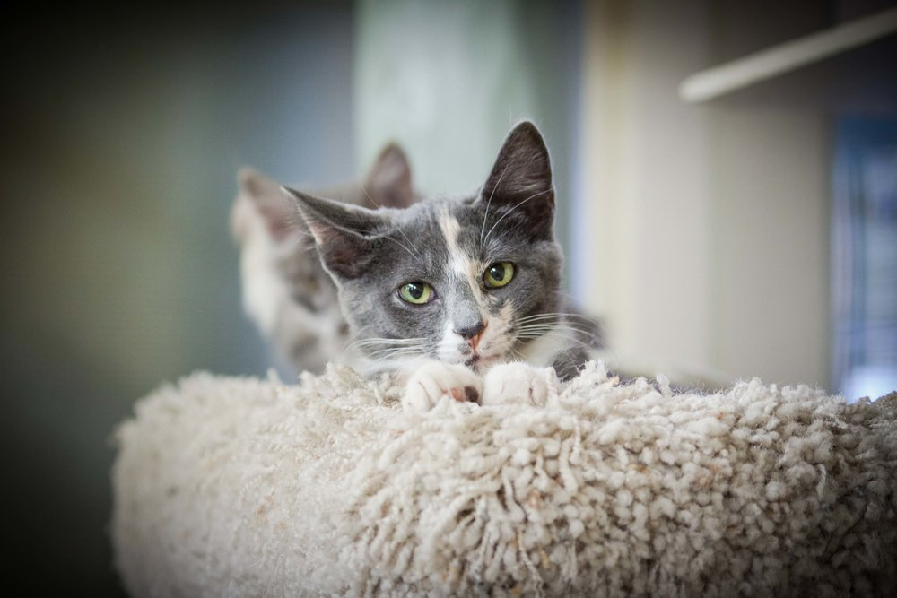Kitten3_sm.jpg