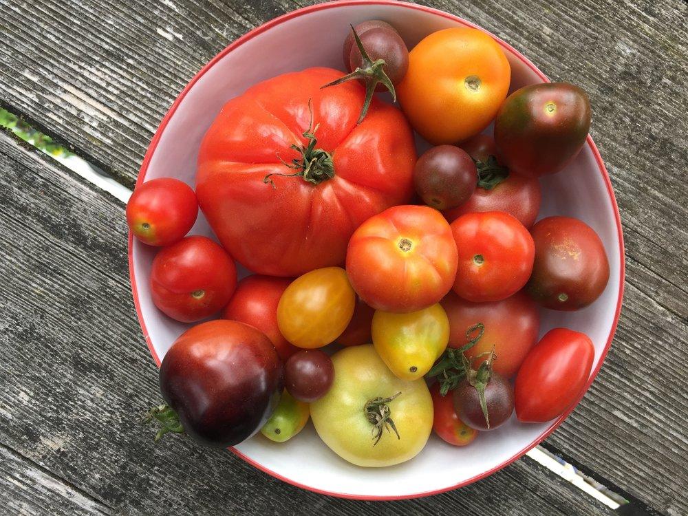Tomaten_diverse Sorten_Nina Mandl TCM.jpg