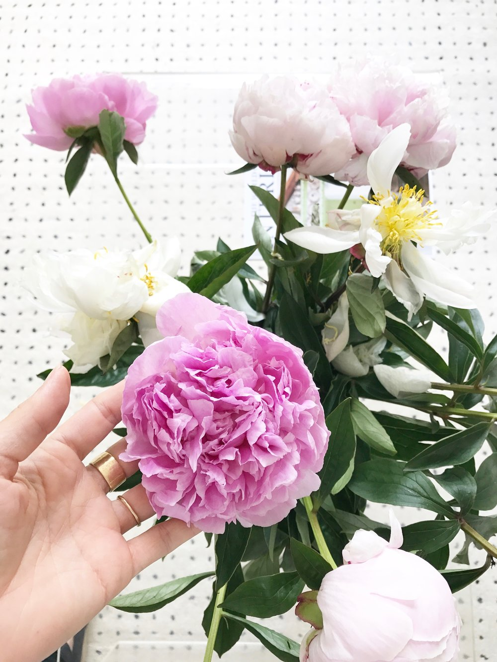 At home with Camilla Pearl Blog and Freddies Flowers