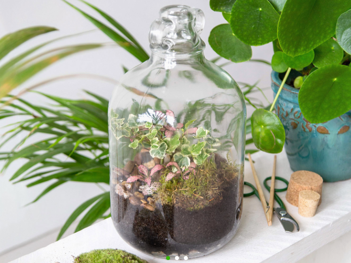London Terrariums - The Tinyjohn made to order Terrarium