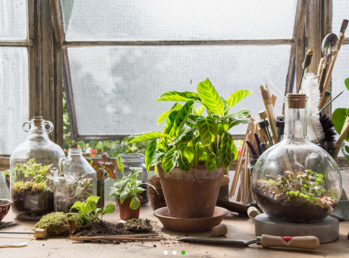 London Terrariums - workshops and shop in New Cross Street London SE14