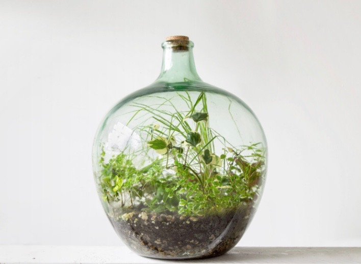 London Terrariums products and workshops.