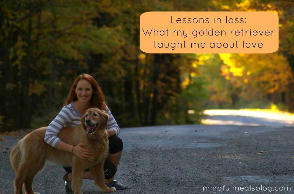 Lessons in loss what my golden retriever taught me about love