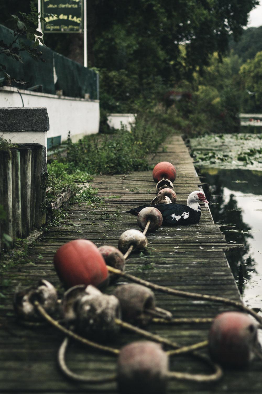 still-life-Crenshaw-2.jpg