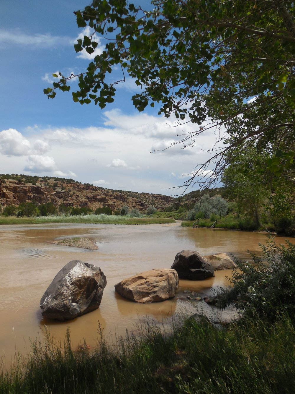 The Rio Chama has dense tamarisk populations.
