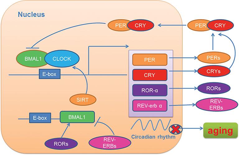 EMF Chart.png