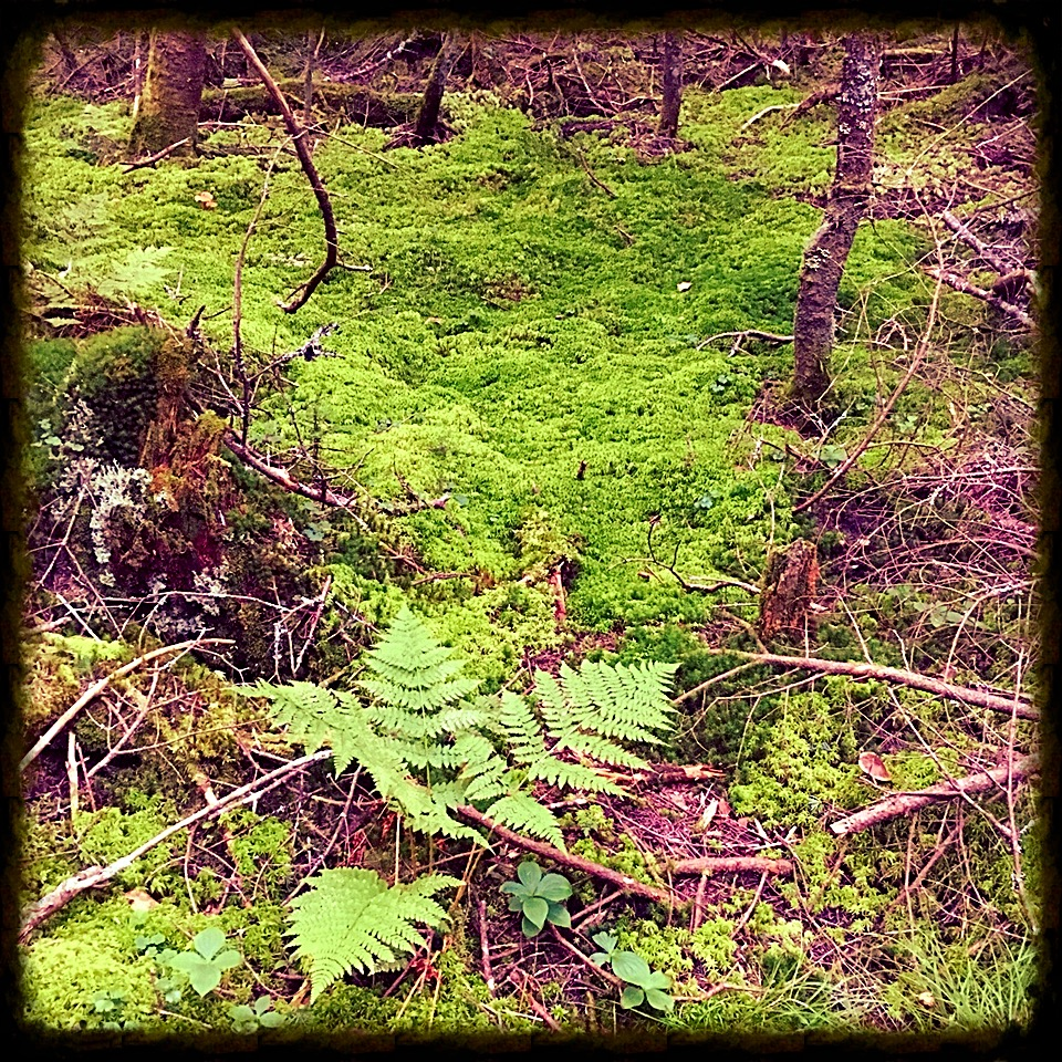 I love these mossy fairyland scenes that nestle in the cols between the mountains.  Moss is my friend.
