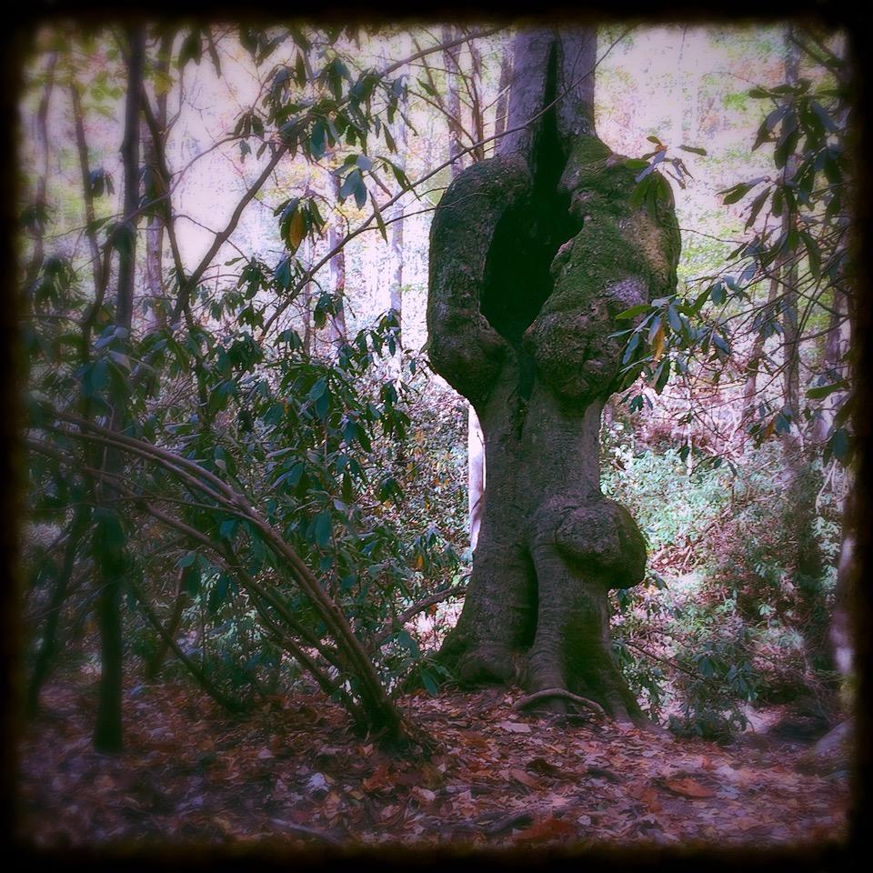weird tree.JPG