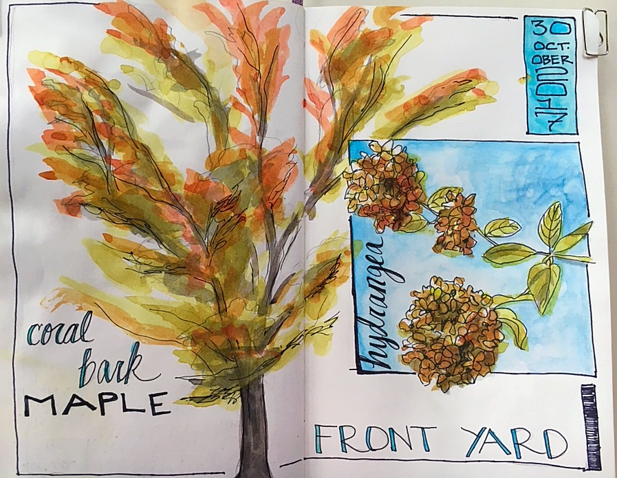 From 10/31/17. I had a dream where I was painting and taking liberties with the line, the ink undercoat and the watercolor. So I did that here. I refused to color within the lines. I love these sketches, especially the hydrangea, for all the random, loose style can suggest. Plus, I went outside and drew from life, not photos. Woot!