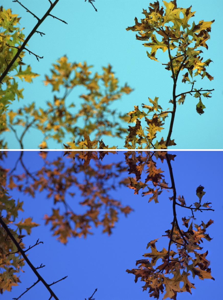 oakDOUBLE copy.jpg