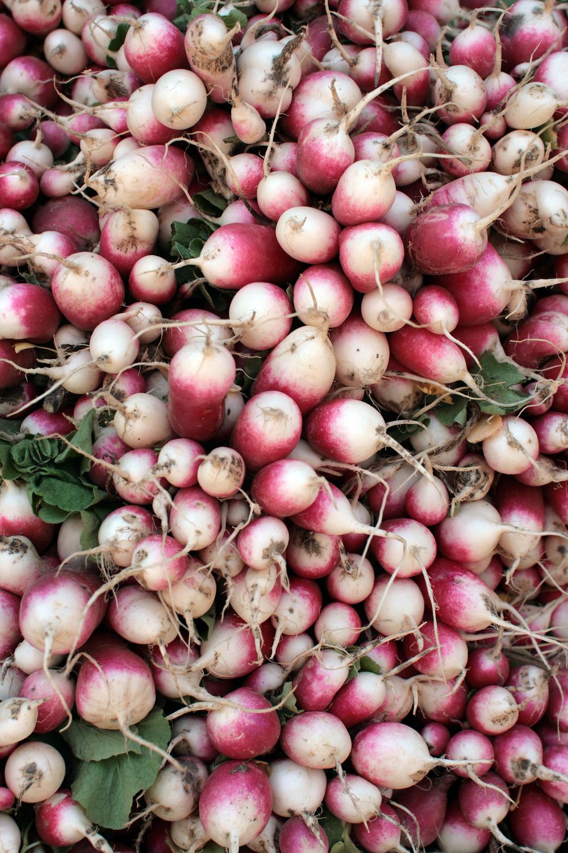 radishes-migliorelli-farm_2503827463_o.jpg