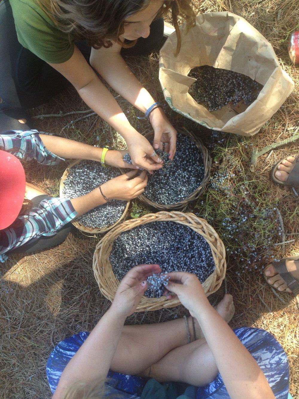 Elderberries for Standing Rock.jpg