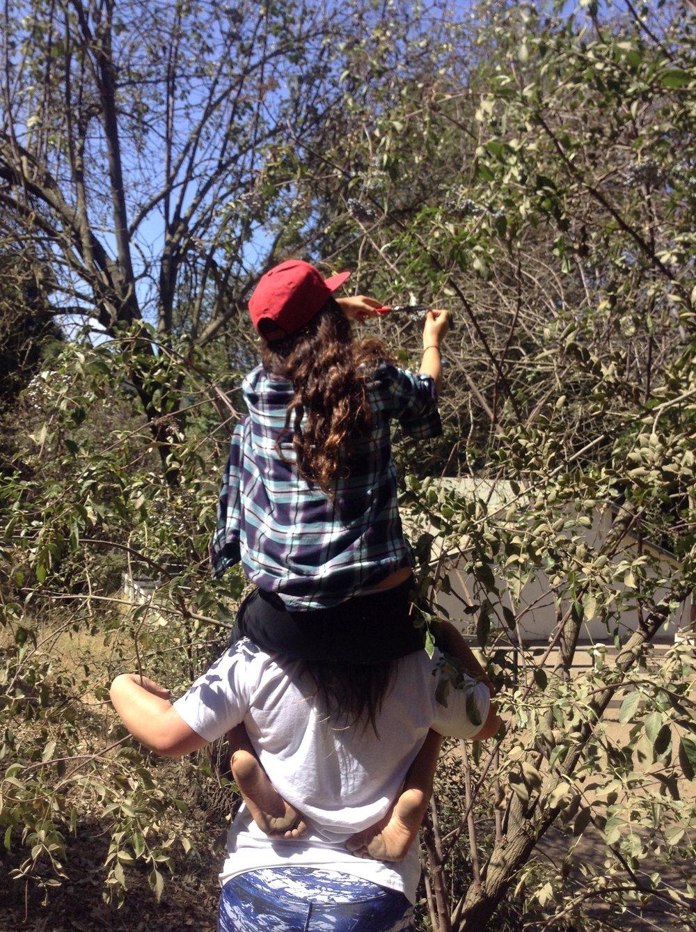 Liliana and Kira harvesting elderberry.JPG.jpeg