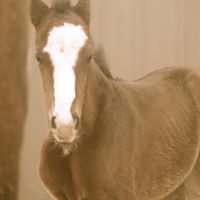 Copy of Foal Dalton