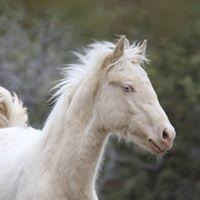 Foal Sheldon