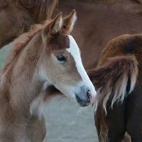 Foal Wilder