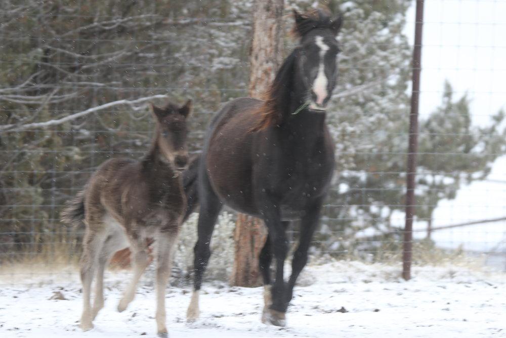Foal Whisper + Aerial