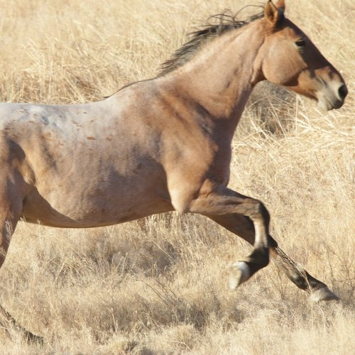 Kimmy before and after — Skydog Ranch - Wild Mustangs and Burros