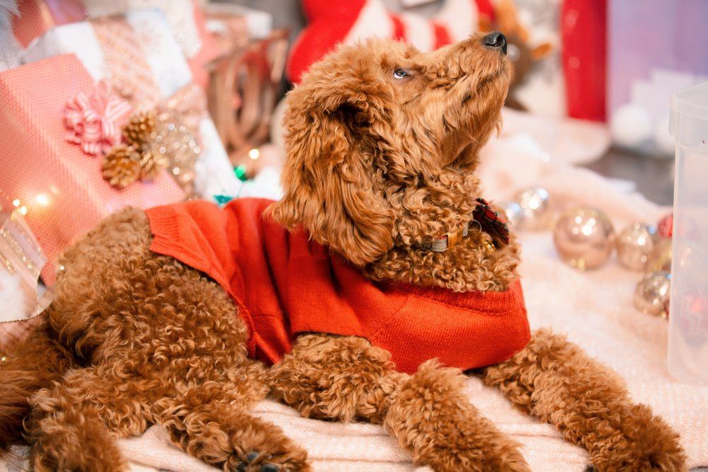 pampered pooch gift guide.JPG