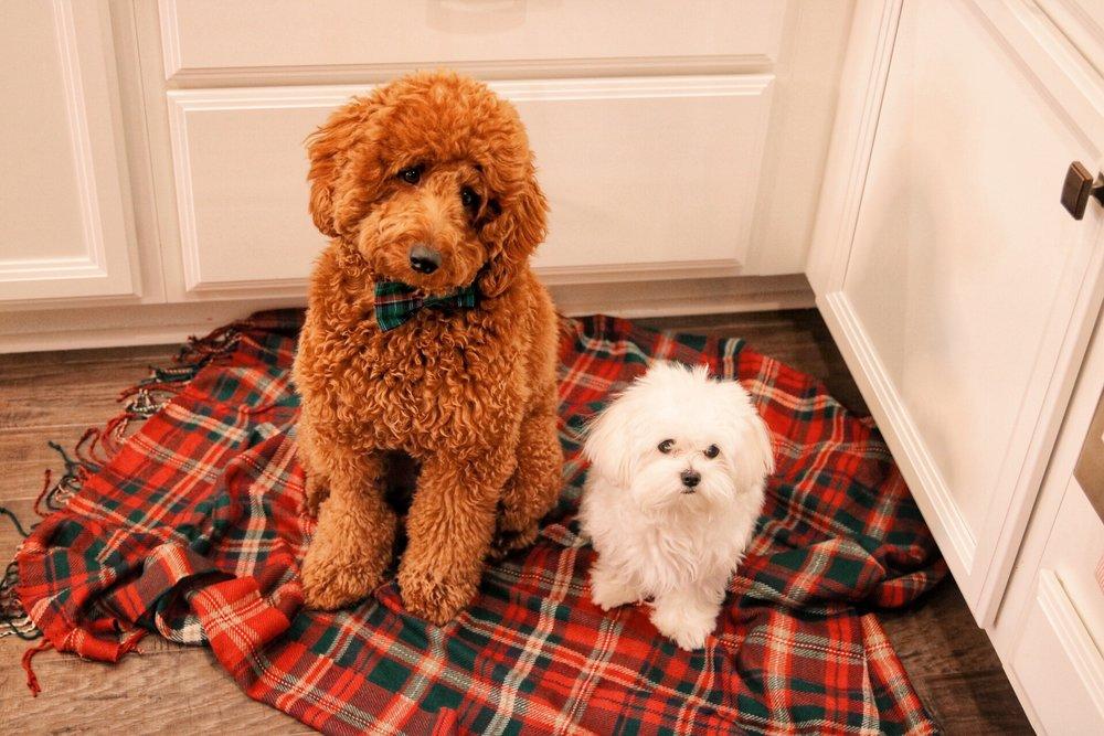 puppy cookie judges.JPG