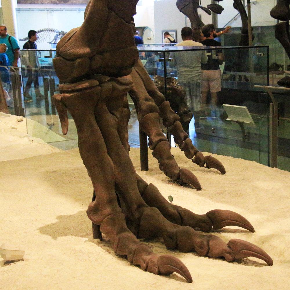 DinosaurSkeletonNaturalHistory_1500x1500.jpg