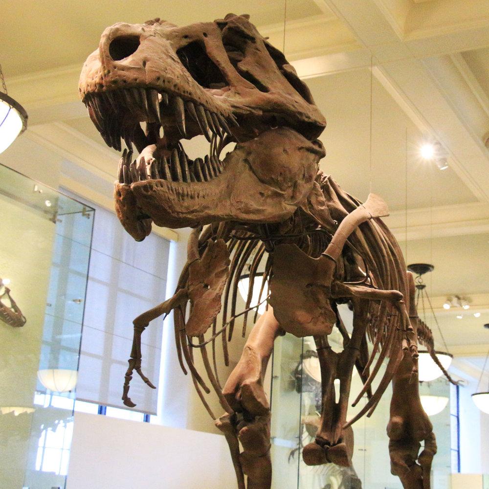 DinosaurSkeleton_1500x1500.jpg