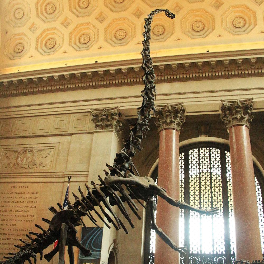 DinosaurSkeletonNaturalHistoryMuseum_1500x1500.jpg