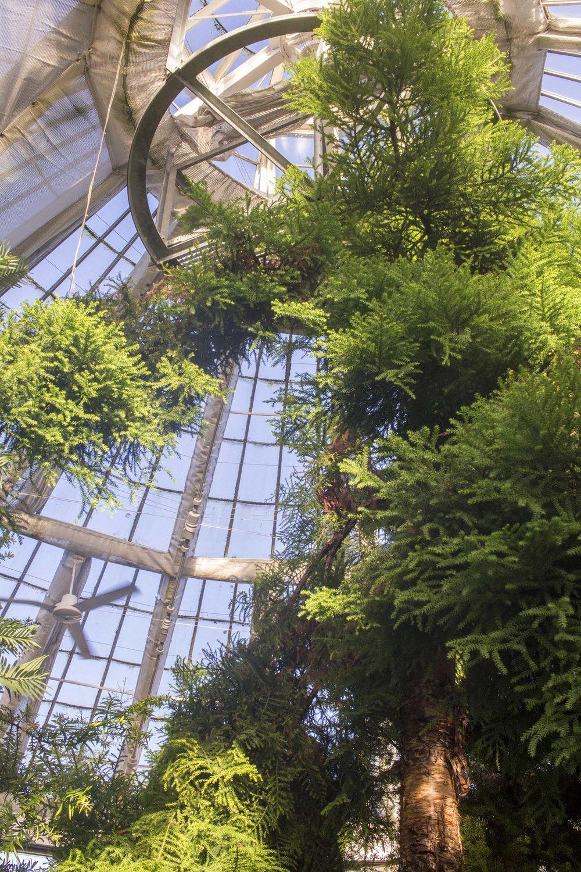 greenery-royal-botanical-gardens-copenhagen.jpg