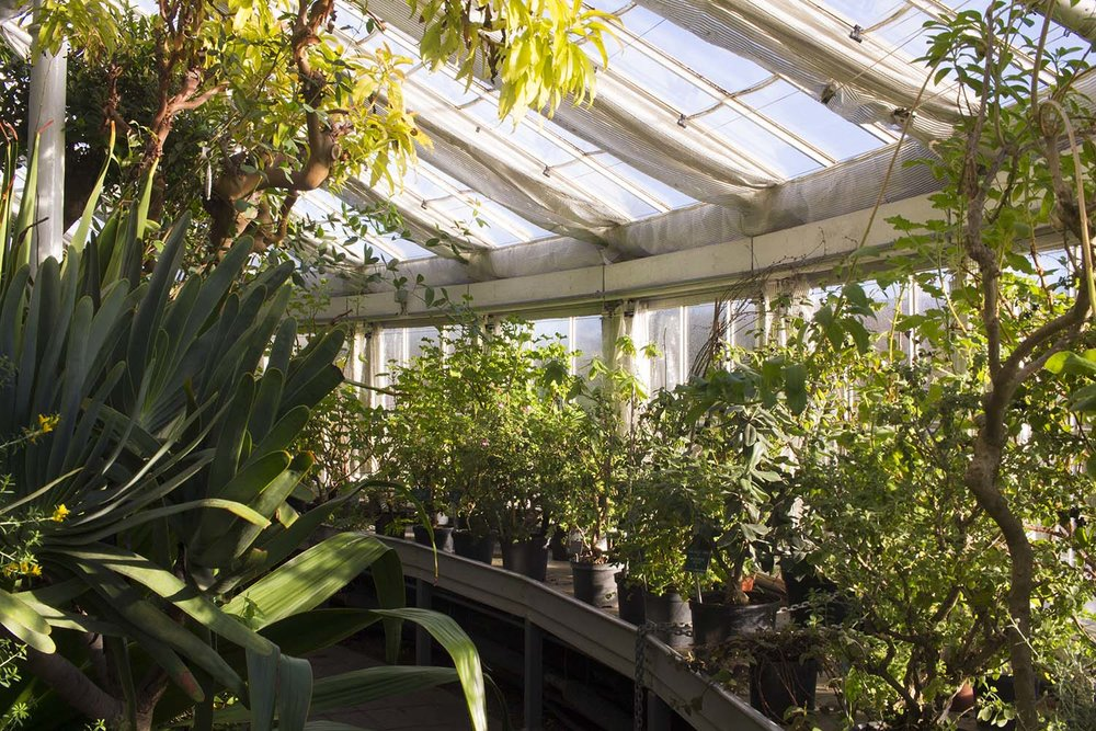 botanical-gardens-copenhagen-greenery.jpg