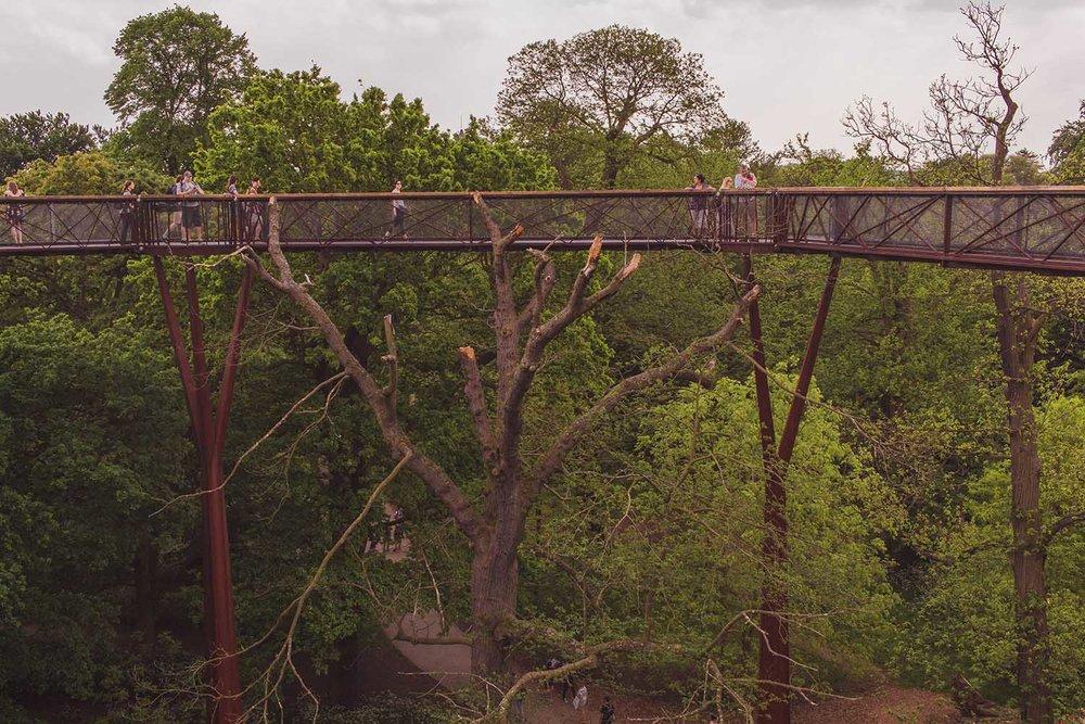 kew-gardens-treetop-walkway-1.jpg