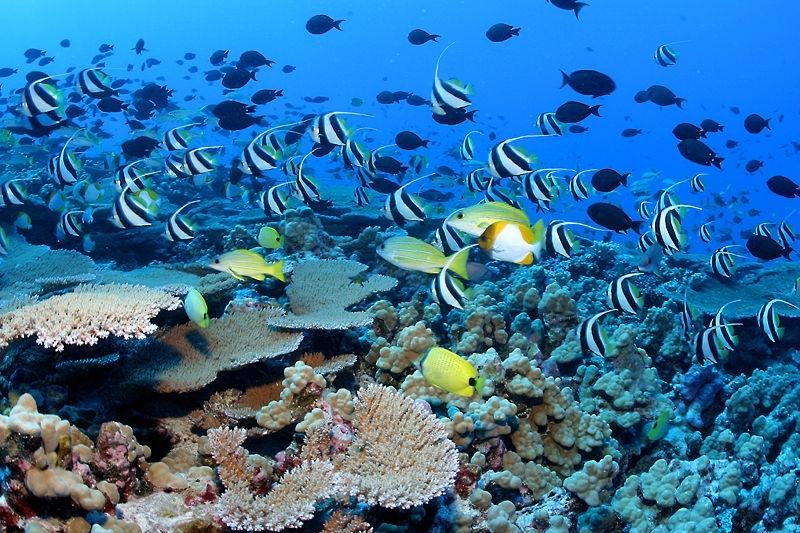 ocean-girl-project-reef-fish-hawaii.jpg