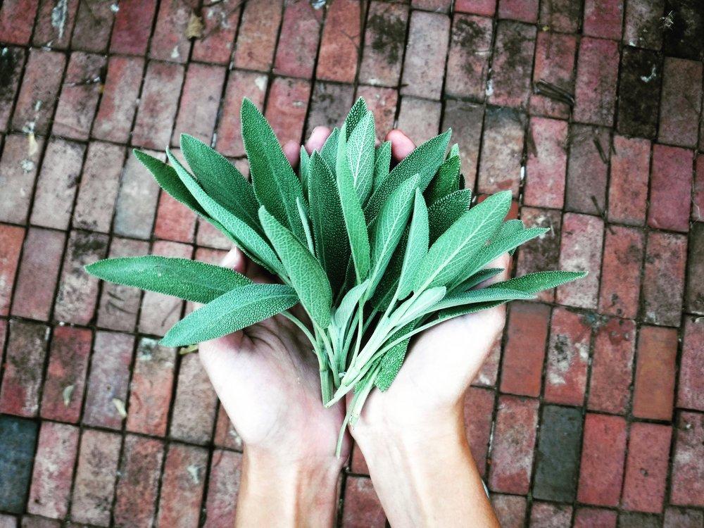 Fresh Sage
