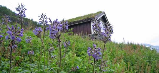 Stølsmaradalen er ein frodig dal der den flotte Tyrihjelmen trivst godt.