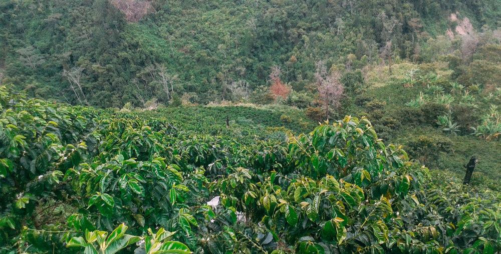 REINALDO CARABALI - SUAREZ (7)-1.jpg