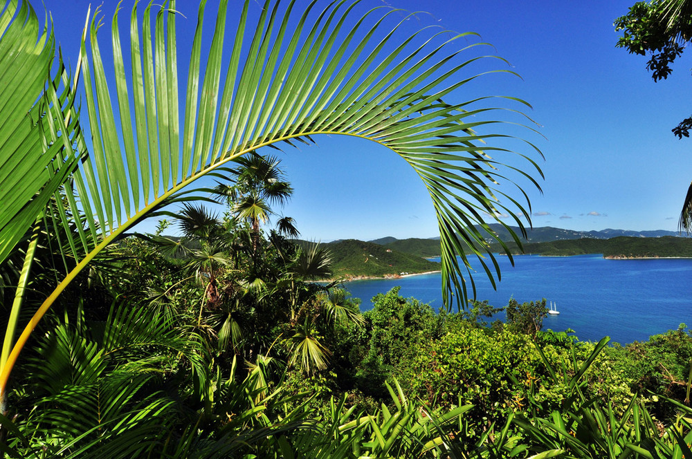 thumb-view-with-palm-fronds.jpg