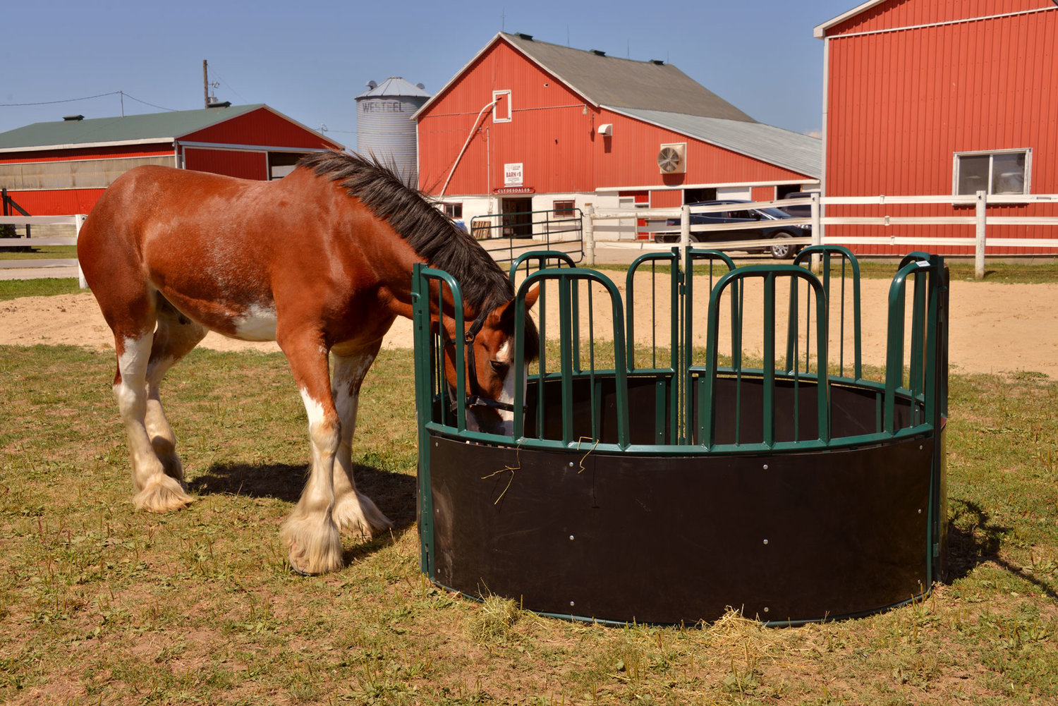 feeder the feeders manager cattle horsemanagers hay cone horse