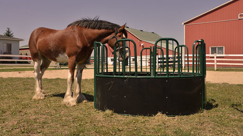 covered automatic open showing horse end another the door rack picture equine feeding with feeders good model feeder hay