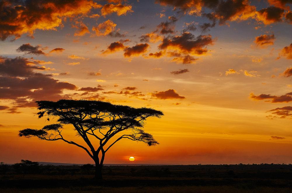 Africatourism.jpeg