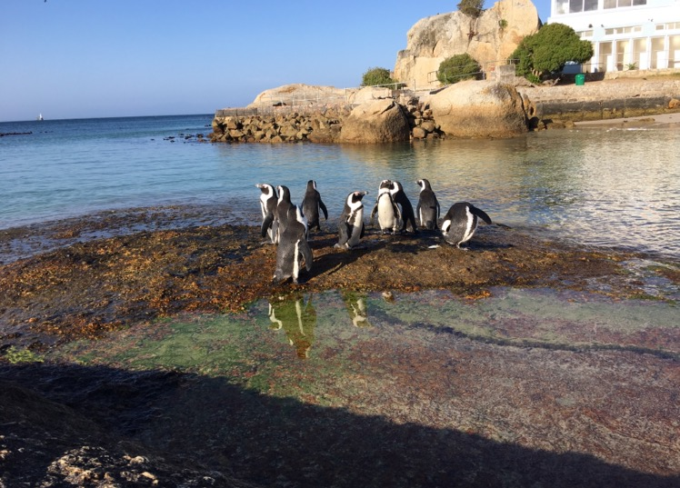 Penguins at Seaforth Beach.jpeg